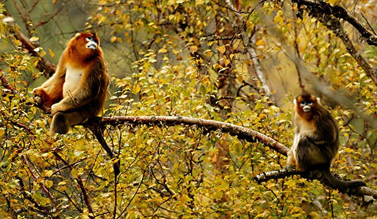 Bird Watching and Wildlife Travel in South Shaanxi and West Sichuan